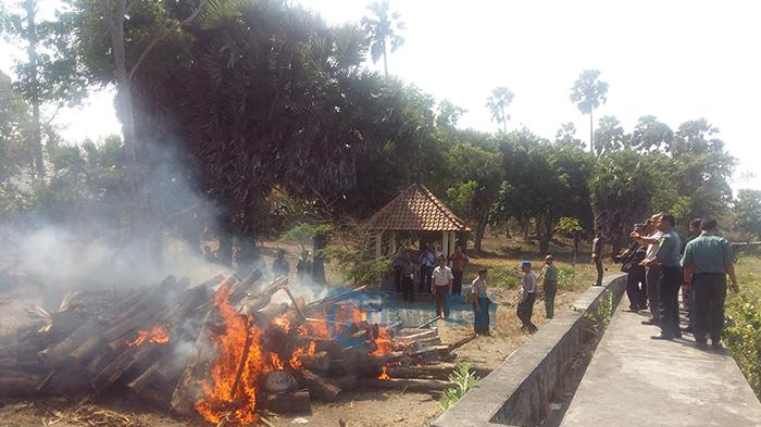 Kayu Intaran dan Sawo Kecik Sitaan Taman Nasional Bali Barat Dimusnahkan