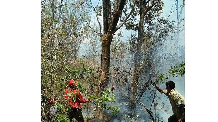 3 Titik Api Muncul di Hutan Lindung Gunung Agung, Made Warta Sebut Kebakaran Diduga karena Hal Ini