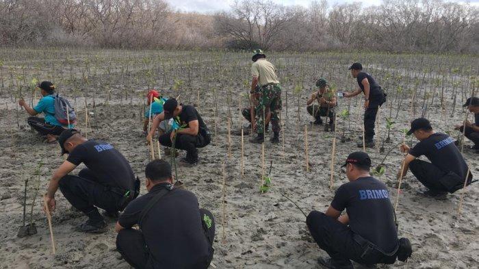 Brimob, TNI dan Ratusan Relawan Tanam Pohon Mangrove di Pesisir Utara Pelabuhan Benoa