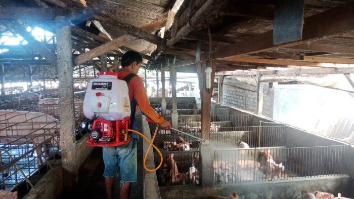 Harga Daging Babi Mulai Merangkak Naik, Diprediksi Tembus Rp 40 Ribu Per Kilogram Saat Galungan