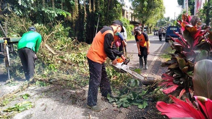 Bencana Alam di Tabanan Telah Terjadi di 22 Titik, TRC BPBD Catat Didominasi Pohon Tumbang