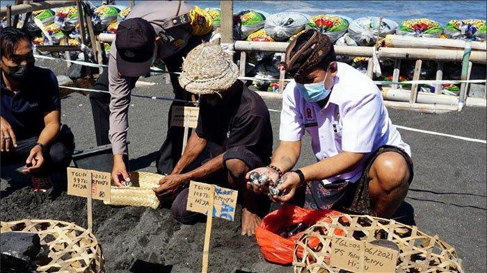 Sregig Harapkan Bantuan Pemerintah Terkait Perlindungan Spesies & Habitat Penyu di Pantai Watuklotok