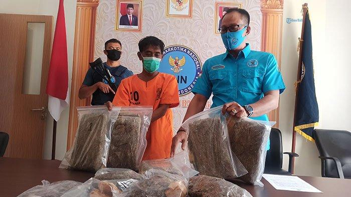 BNNK Badung Berhasil Gagalkan Penyelundupan Ganja Seberat 5 Kg, Amankan Jaringan Pengedar Bali Medan