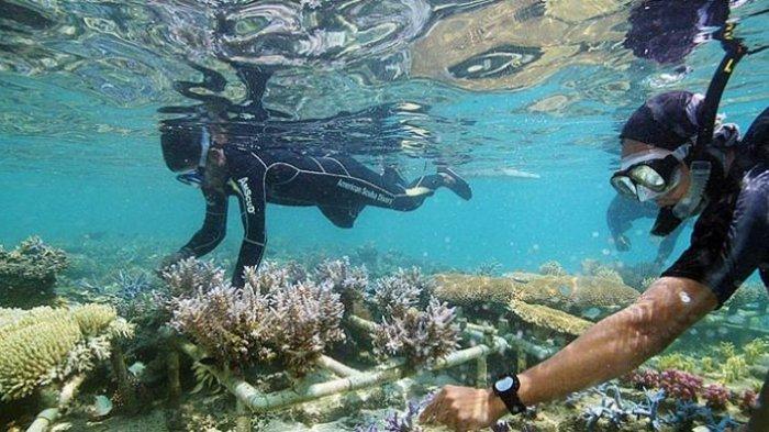 Pemerintah Bakal Restorasi Terumbu Karang di Lima Wilayah Pesisir Bali