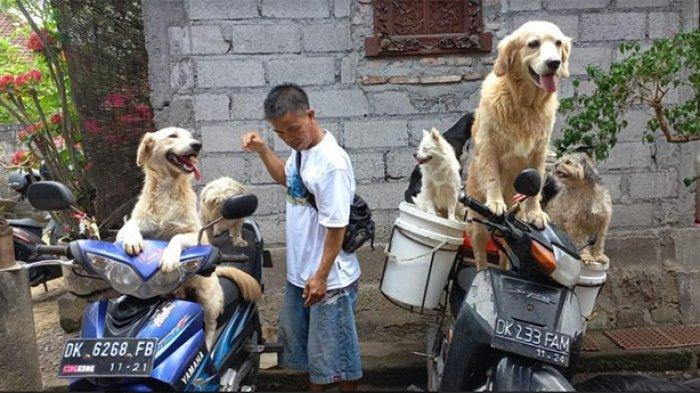 Cerita Ketut Widanta Ajak 6 Anjing Peliharaannya Keliling untuk Mencari Pakan Ternak Babi di Badung