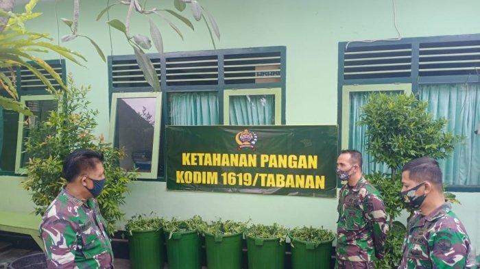 Dandim Tabanan Ajak Masyarakat Inovatif Kembangkan Ketahanan Pangan dengan Budidaya Lele & Kangkung