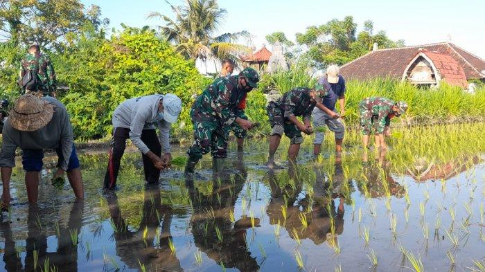 Bangkitkan Sektor Pangan di Masa Pandemi, Kodim Klungkung Laksanakan Program Ketahanan Pangan