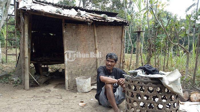 Hidup di Gubuk Reyot Tak Layak Huni, Nasib Komang Sarjana Tak Seindah Sarjana Umumnya