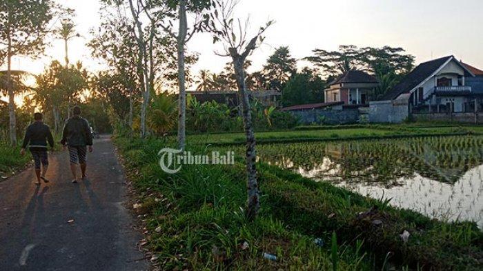 Sawah di Bangli Menyusut 699 Ha, Beralih Fungsi Jadi Permukiman