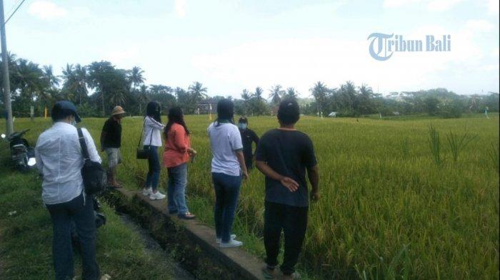 Tak Pantang Menyerah, Desa Sidan Kini Siapkan Agrowisata