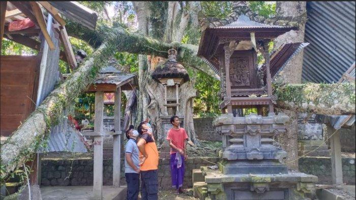 Pohon Tumbang Timpa Pelinggih dan Penyengker Pura Maksan Kancing Gumi di Desa Ababi Karangasem