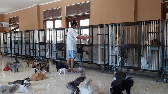 Kronologi 11 Kucing di Denpasar yang Berhasil Diselamatkan Saat Akan Disembelih