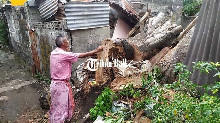Rumahnya Hancur Akibat Tertimpa Pohon Tumbang, Ini Penuturan Nyoman Sujana Terkait Kronologisnya