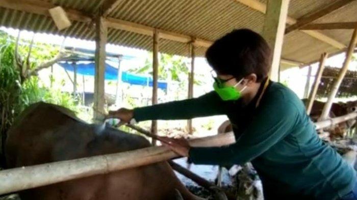 Siapkan Sapi Berkualitas, Unud dan Puskeswan Gianyar Lakukan Pendampingan Peternakan Sapi