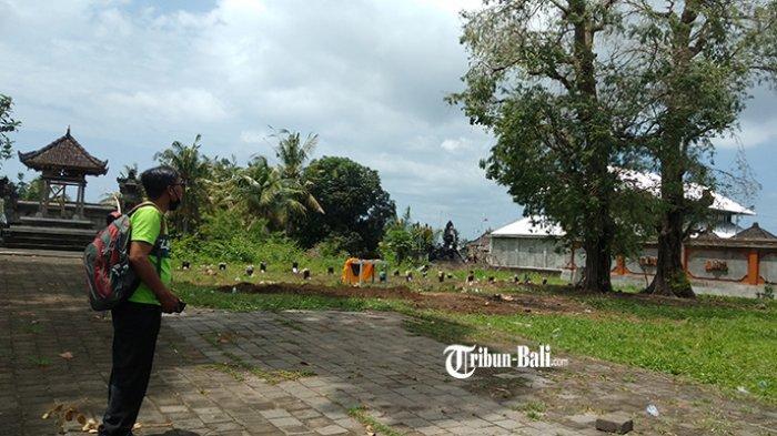 Ratusan Burung Pipit Jatuh dan Mati di Gianyar, Begini Tanggapan BKSDA Bali
