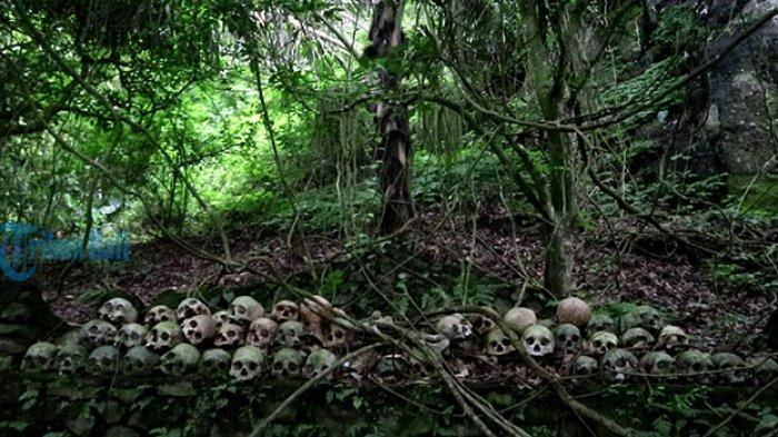 Keramatnya Pohon Taru Menyan Berusia 11 Abad, Hilangkan Bau Busuk Jenazah di Kuburan Terunyan Bangli
