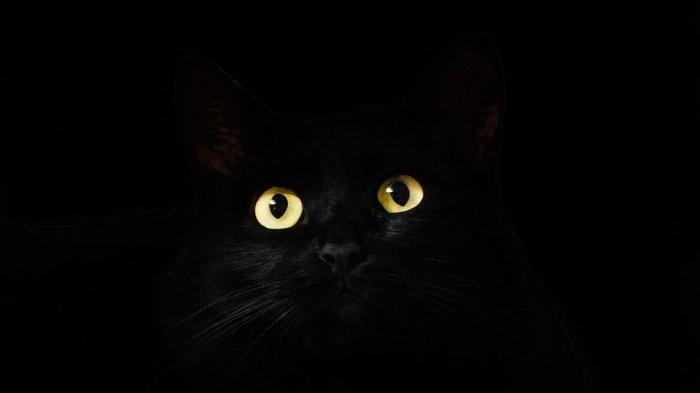 Kucing Hitam Sering Dikaitkan dengan Penyihir dan Nasib Buruk,Berikut Legendanya