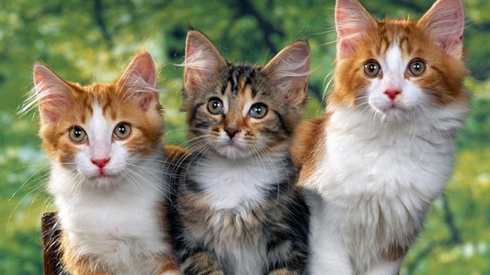 Kenapa Kucing Punya 9 Nyawa? Ini Fakta-faktanya