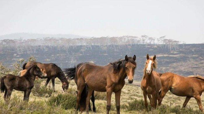 5 Arti Mimpi Kuda, Ternyata Berhubungan Dengan Rezeki Hingga Kekecewaan