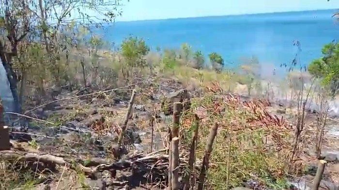 Kebakaran di Bunutan Karangasem, Hektaran Lahan Warga Hangus Terbakar