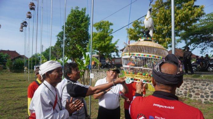 Lomba Tekukur, Cara Pemda Tingkatkan Kunjungan Wisata ke Jembrana
