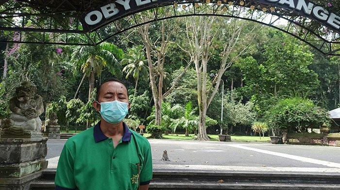 Monyet Kelaparan Bisa Galak, Pengelola Objek Wisata Sangeh Bali Masih Buka Donasi Makanan