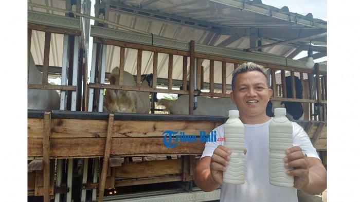 Pengetahuan Tentang Susu Kambing Murni Minim, Made Raka Rutin Berikan Edukasi Kepada Customer