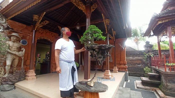 Warga Mengwi Badung Ciptakan Bonsai dengan Konsep Avatar, Mengambang Melawan Gaya Gravitasi