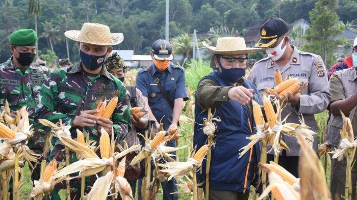 Bupati Mas Sumatri Ikut Panen Raya Bersama Petani Tegallinggah Karangasem