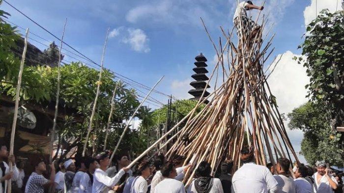 Mengungkap Sejarah Tradisi Mekotek dan Kekutan Kayu Pulet Bisa Digunakan Hingga 10 Tahun