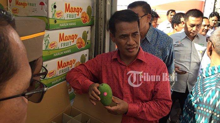 Ekspor Perdana Mangga dari Bali ke Rusia Capai 2,5 Ton, Mentan: Harga Satu Kilo Rp 500 ribu