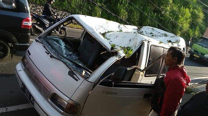 Pohon Tumbang di Tabanan, Rusak Sebuah Minibus
