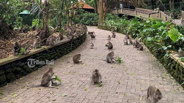 Skema Pembukaan Pariwisata Ubud Belum Jelas, Kadispar Gianyar: Masih Tunggu Vaksinasi Tahap 2