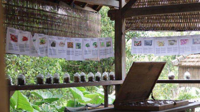 Museum Unik di Buleleng, Wijaya Kumpulkan 130 Jenis Rempah dari Sumatera Hingga India