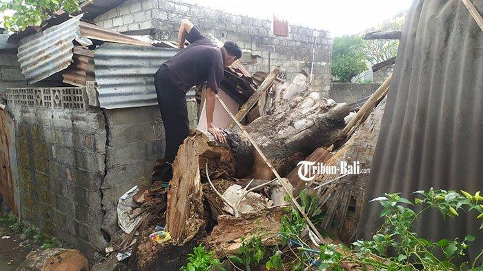 UPDATE Peristiwa Pohon Tumbang di Denpasar, Keluarga Sujana Kini Menumpang di Rumah Tetangga