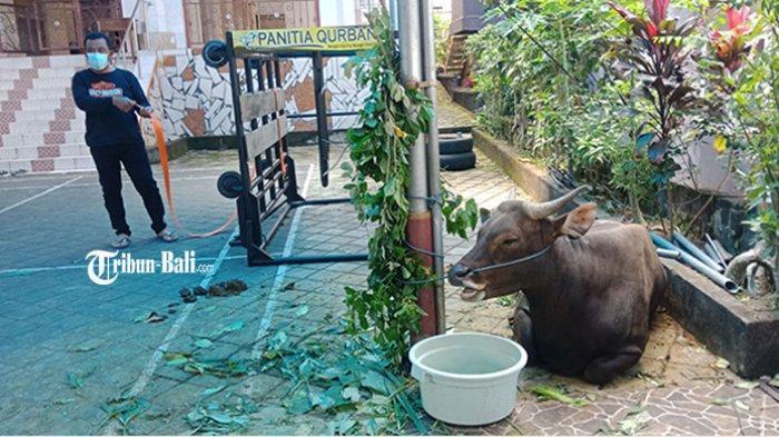 Pelaksanaan Idul Adha di Bangli, Sholat Ied Dibatasi 30 Orang, Pemotongan Hewan Dilakukan Dua Hari