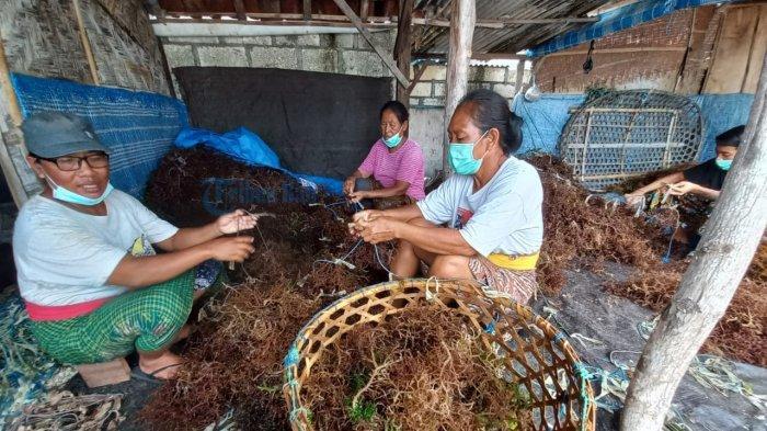 Bupati Suwirta Harapkan Pemerintah Kanada Bisa Bantu Ekspor Rumput Laut Nusa Penida Klungkung