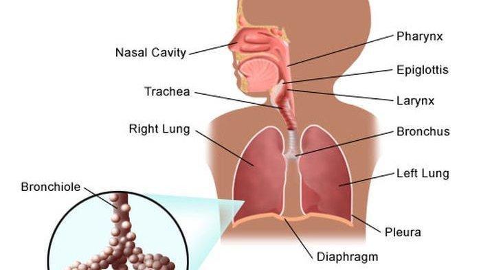 Mengenal Penyebab, Gejala dan Pencegahan Pneumonia