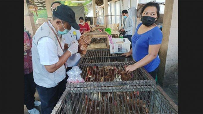 Antisipasi Penyebaran Avian Influenza, Distan Denpasar Lakukan Swab Anus Unggas di Pasar Kumbasari