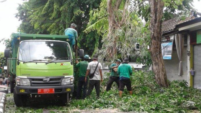 Antisipasi Cuaca Buruk di Penghujung Tahun, DLHK Denpasar Terus Lakukan Perompesan Pohon Perindang