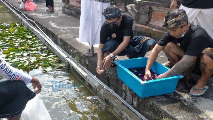 Ingin Kenalkan Koi Lebih Luas, 2 Komunitas Ini Lakukan Dana Punia Koi di Pura di Denpasar
