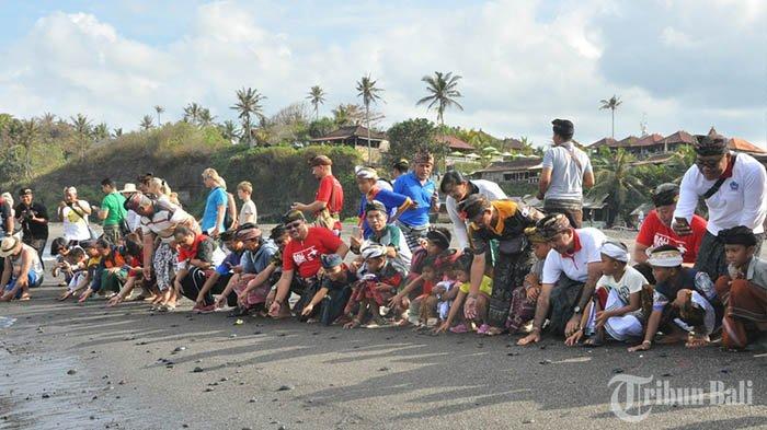 Masyarakat Antusias Tanam Pohon Pelindung dan Lepas 65 Tukik di Pantai Pengasahan Tabanan