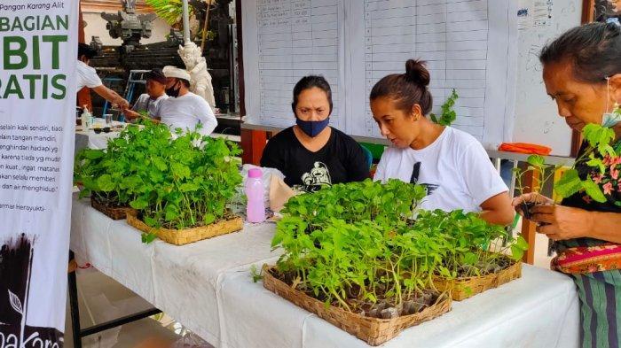 1.200 Bibit Tanaman Cabai Hingga Tomat Dibagikan ke WargaBanjar Gemeh Denpasar