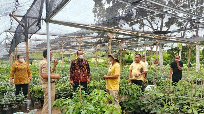 Miliki Pangsa Pasar Ekspor, Buah Alpukat Bakal Ditanam di Hutan Lestari Wilayah Jembrana