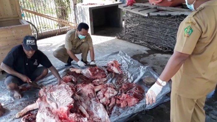 Jelang Hari Raya Galungan dan Kuningan, Permintaan Daging Babi di Jembrana Bali Menurun