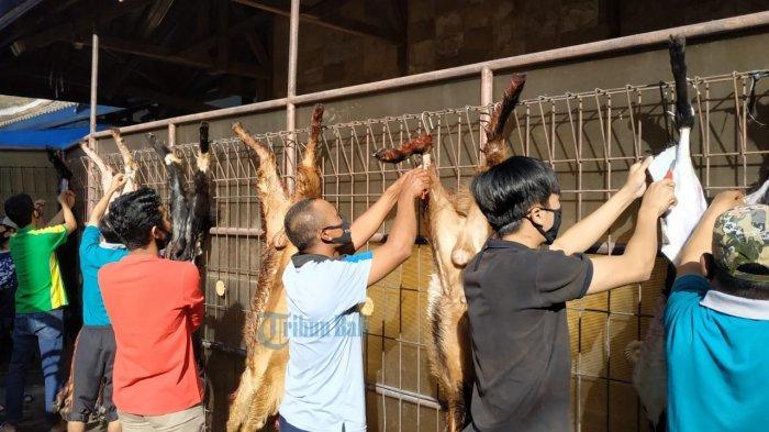 Idul Adha di Tengah Pandemi Covid-19, Jumlah Hewan Kurban DPW LDII Bali Turun 15 Persen