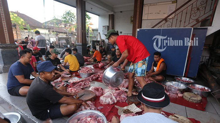 Foto Babi Di Potong 100 Mahasiswa Dilibatkan Cek Kesehatan Daging Babi Ada 2 000 Babi Yang Dipotong Di Rph Badung Tribun Bali