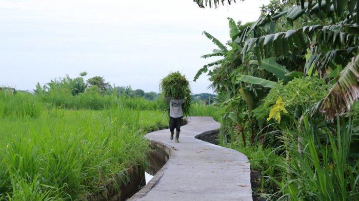 6 Subak di Klungkung Bali Akan Terima Penanganan Jalan Usaha Tani Tahun 2021