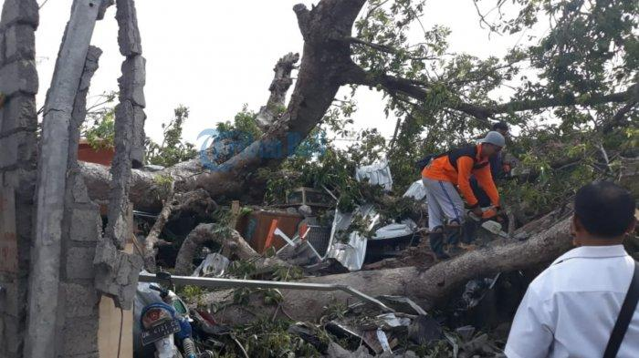 Sang Ibu Dekap Anaknya Saat Pohon Tua Hancurkan Rumahnya, Sekeluarga Terjebak Reruntuhan 15 Menit