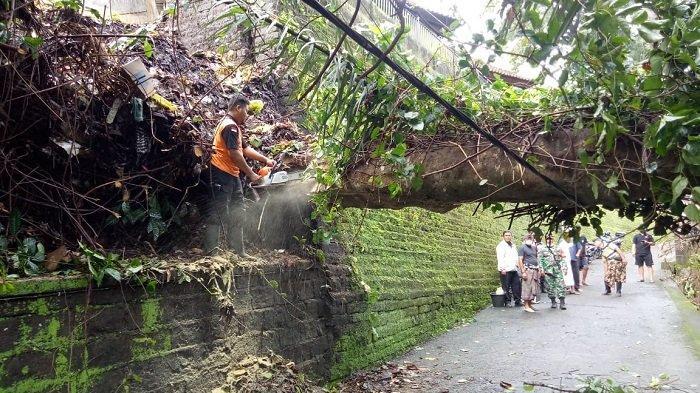 Dalam Dua Hari, 5 Bencana Alam Terjadi di Tabanan, Pohon Tumbang hingga Tanah Longsor